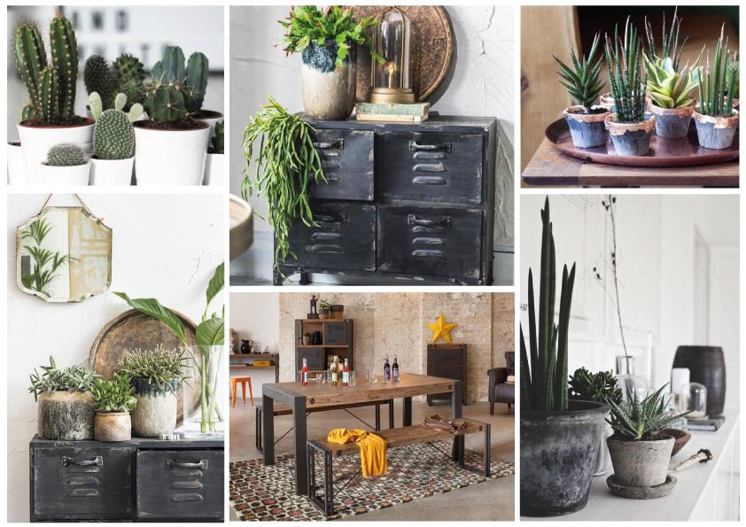 Welke Planten Passen Er In Een Industriele Inrichting Happy Home